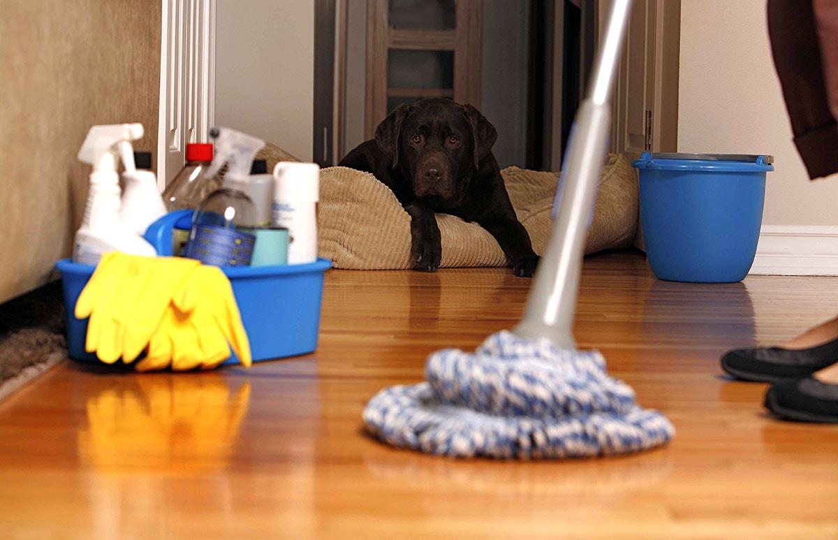 impresa di pulizie gmsgroup specializzata in pulizie uffici milano con presenza di cani